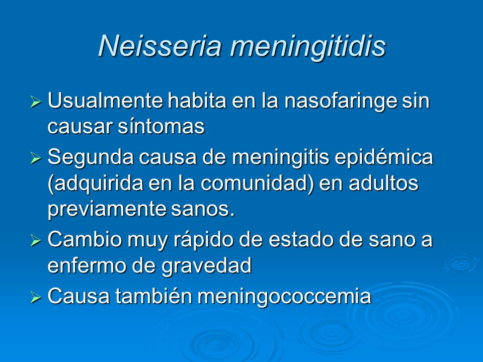 Usualmente habita en la nasofaringe sin causar síntomas Usualmente habita en la nasofaringe sin causar síntomas Segunda causa de meningitis epidémica