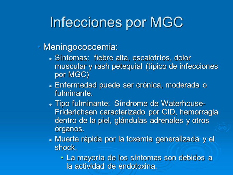 Infecciones por MGC Meningococcemia:Meningococcemia: Síntomas: fiebre alta, escalofríos, dolor muscular y rash petequial (típico de infecciones por MG