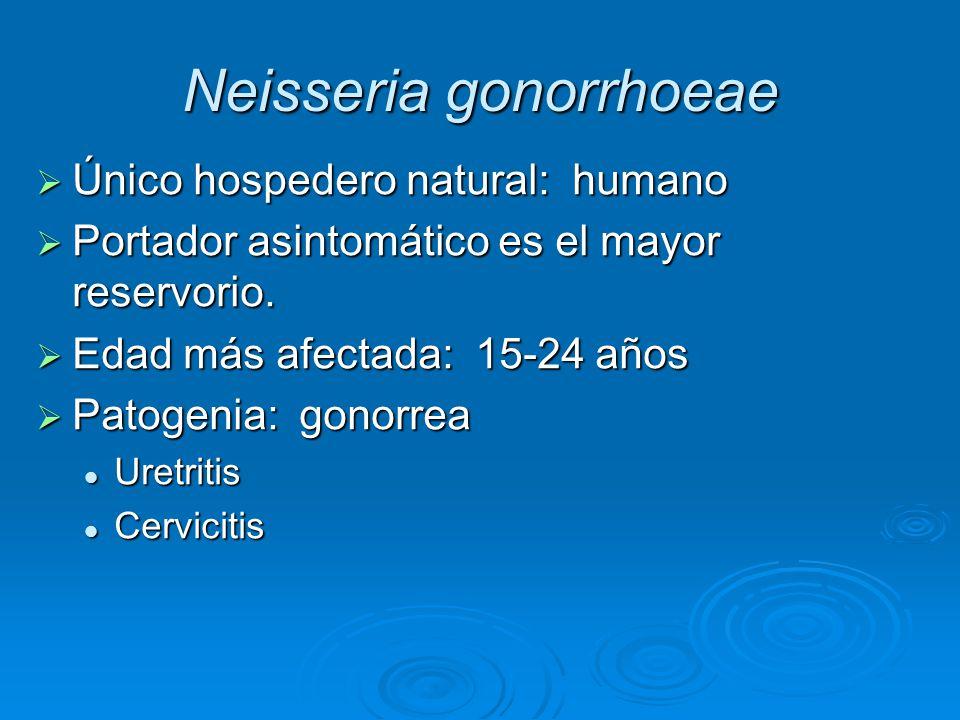 Único hospedero natural: humano Único hospedero natural: humano Portador asintomático es el mayor reservorio. Portador asintomático es el mayor reserv