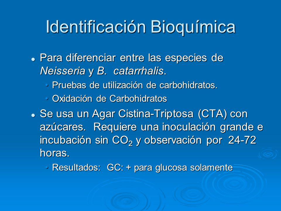 Identificación Bioquímica Para diferenciar entre las especies de Neisseria y B. catarrhalis. Para diferenciar entre las especies de Neisseria y B. cat
