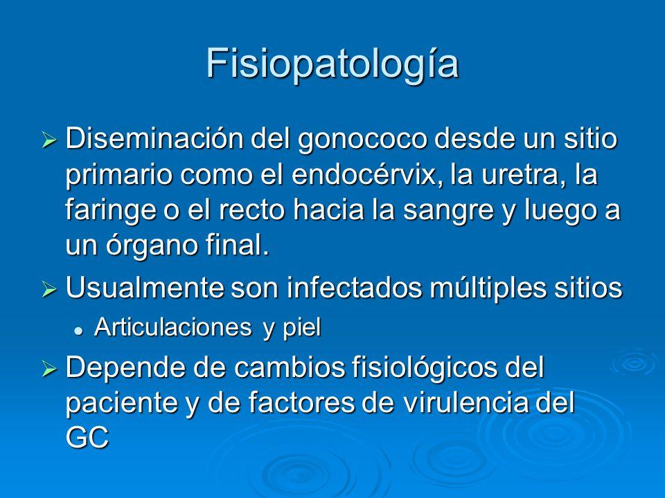 Fisiopatología Diseminación del gonococo desde un sitio primario como el endocérvix, la uretra, la faringe o el recto hacia la sangre y luego a un órg