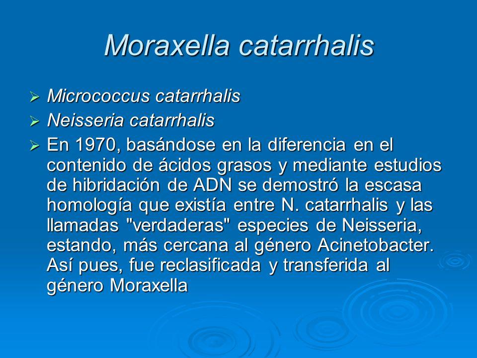 Moraxella catarrhalis Micrococcus catarrhalis Micrococcus catarrhalis Neisseria catarrhalis Neisseria catarrhalis En 1970, basándose en la diferencia