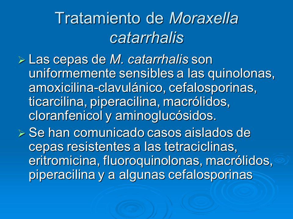 Tratamiento de Moraxella catarrhalis Las cepas de M. catarrhalis son uniformemente sensibles a las quinolonas, amoxicilina-clavulánico, cefalosporinas