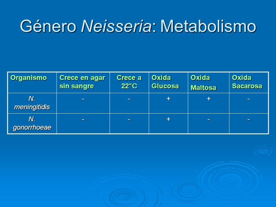 Género Neisseria: Metabolismo Organismo Crece en agar sin sangre Crece a 22 °C Oxida Glucosa OxidaMaltosa Oxida Sacarosa N. meningitidis --++- N. gono