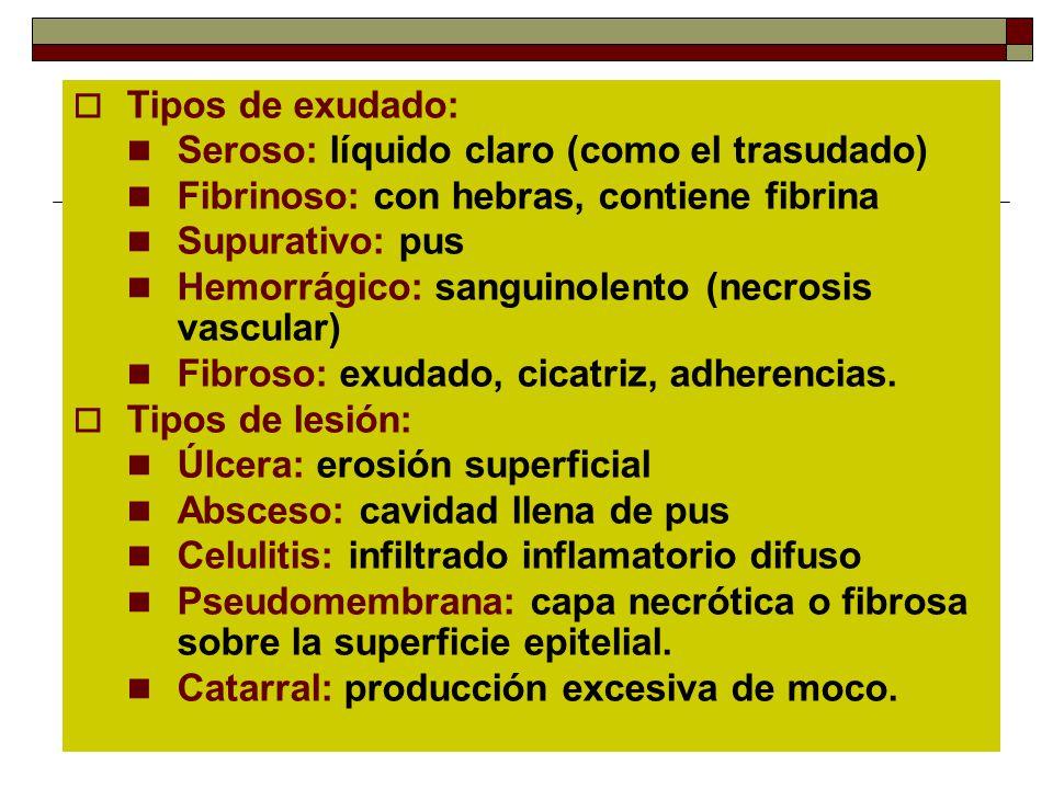 Tipos de exudado: Seroso: líquido claro (como el trasudado) Fibrinoso: con hebras, contiene fibrina Supurativo: pus Hemorrágico: sanguinolento (necros