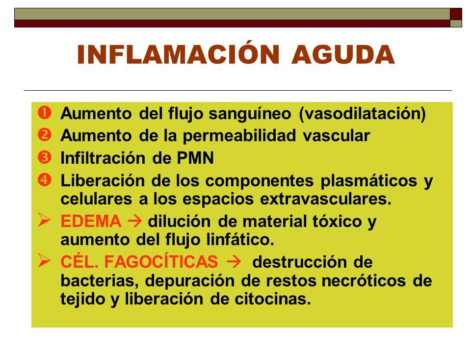 INFLAMACIÓN AGUDA Aumento del flujo sanguíneo (vasodilatación) Aumento de la permeabilidad vascular Infiltración de PMN Liberación de los componentes