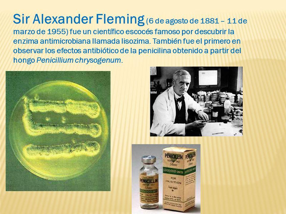 Sir Alexander Fleming (6 de agosto de 1881 – 11 de marzo de 1955) fue un científico escocés famoso por descubrir la enzima antimicrobiana llamada lisozima.