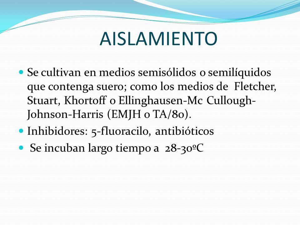 AISLAMIENTO Se cultivan en medios semisólidos o semilíquidos que contenga suero; como los medios de Fletcher, Stuart, Khortoff o Ellinghausen-Mc Cullough- Johnson-Harris (EMJH o TA/80).