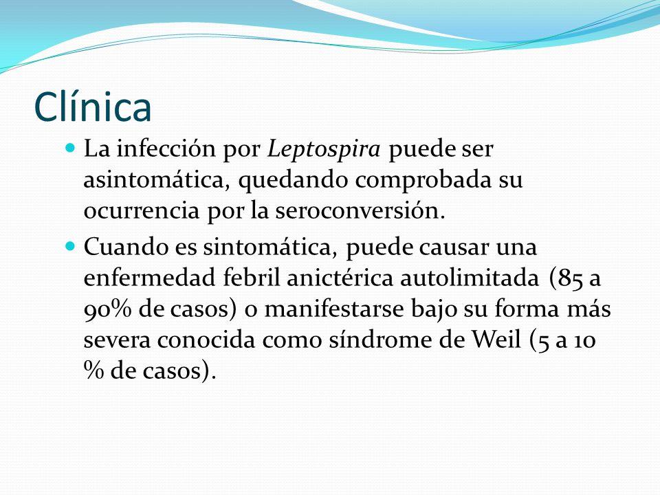 Clínica La infección por Leptospira puede ser asintomática, quedando comprobada su ocurrencia por la seroconversión.