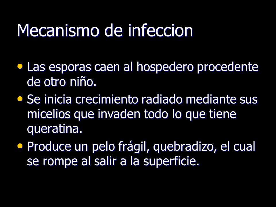 Mecanismo de infeccion Las esporas caen al hospedero procedente de otro niño. Las esporas caen al hospedero procedente de otro niño. Se inicia crecimi