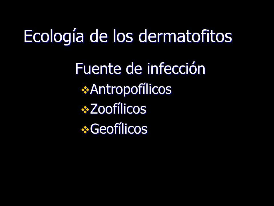 Ecología de los dermatofitos Fuente de infección Antropofílicos Antropofílicos Zoofílicos Zoofílicos Geofílicos Geofílicos