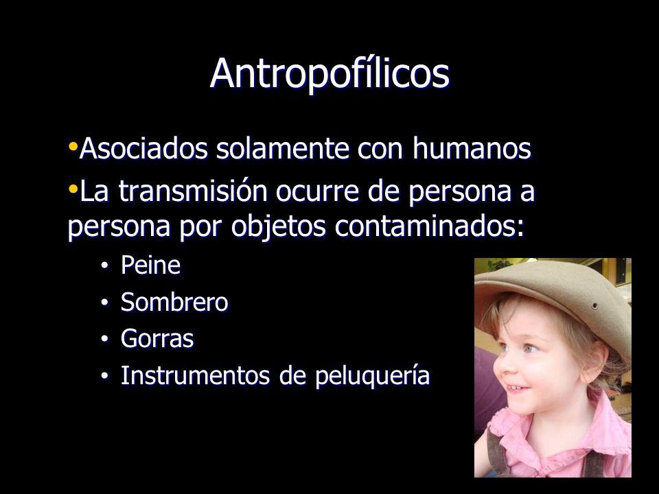 Antropofílicos Asociados solamente con humanos Asociados solamente con humanos La transmisión ocurre de persona a persona por objetos contaminados: La
