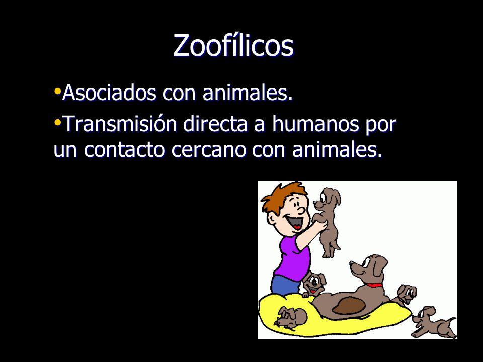 Zoofílicos Asociados con animales. Asociados con animales. Transmisión directa a humanos por un contacto cercano con animales. Transmisión directa a h