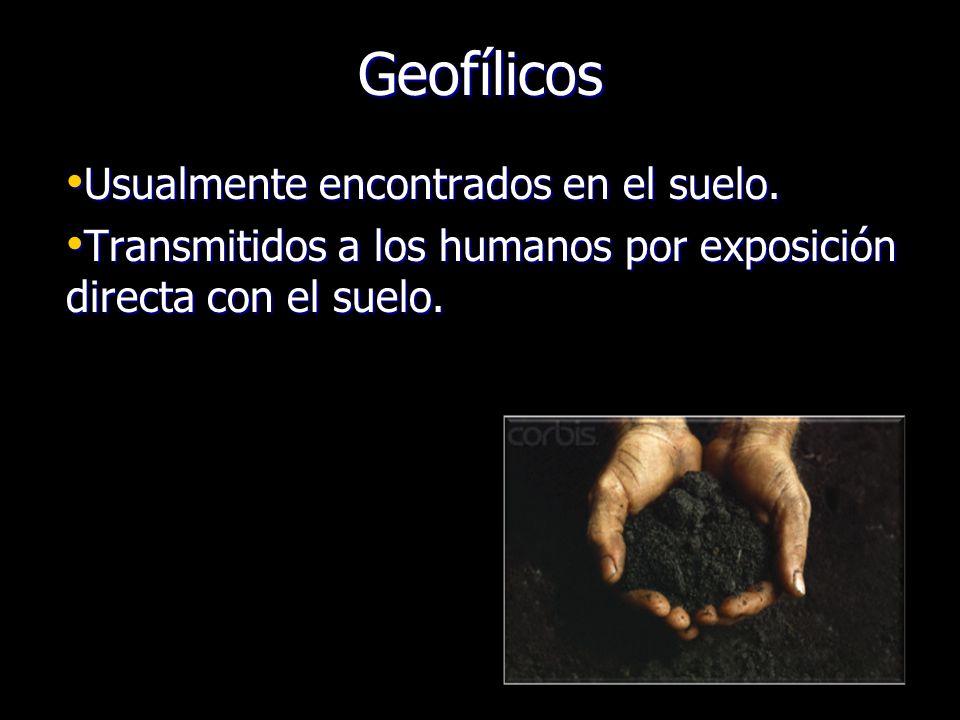 Geofílicos Usualmente encontrados en el suelo. Usualmente encontrados en el suelo. Transmitidos a los humanos por exposición directa con el suelo. Tra