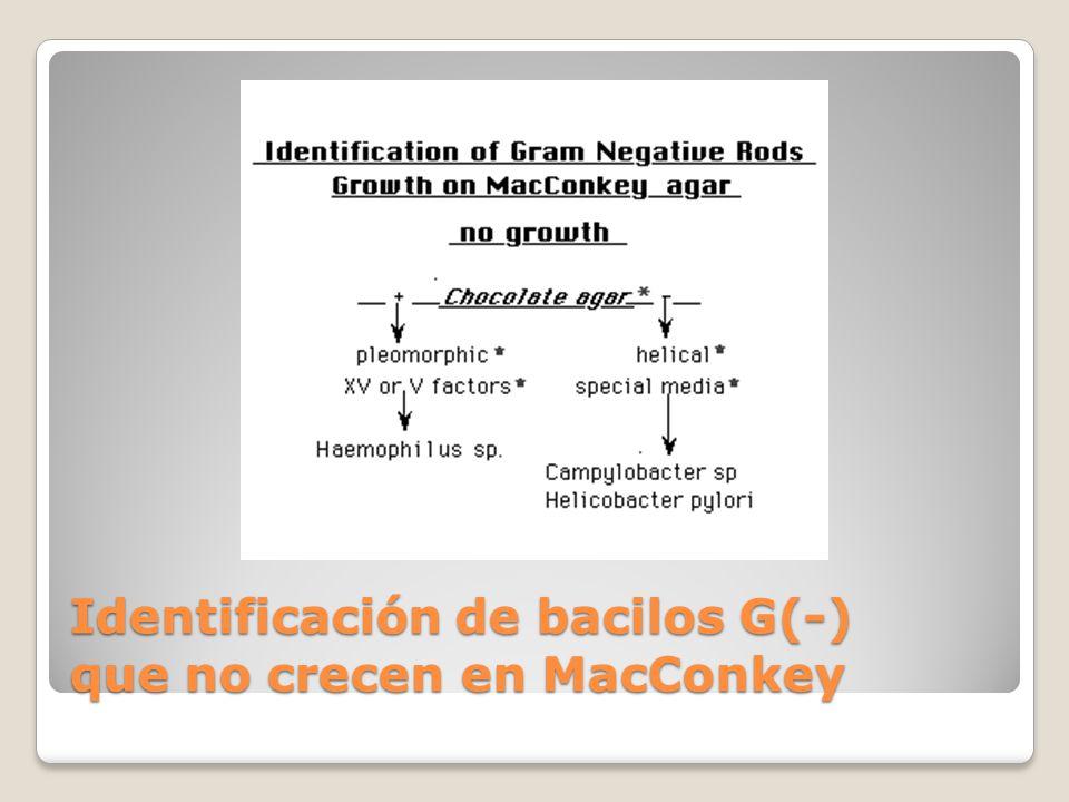 Identificación de bacilos G(-) que no crecen en MacConkey