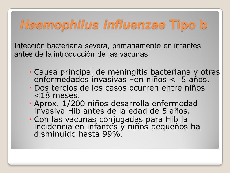 Haemophilus influenzae Tipo b Infección bacteriana severa, primariamente en infantes antes de la introducción de las vacunas: Causa principal de meningitis bacteriana y otras enfermedades invasivas –en niños < 5 años.