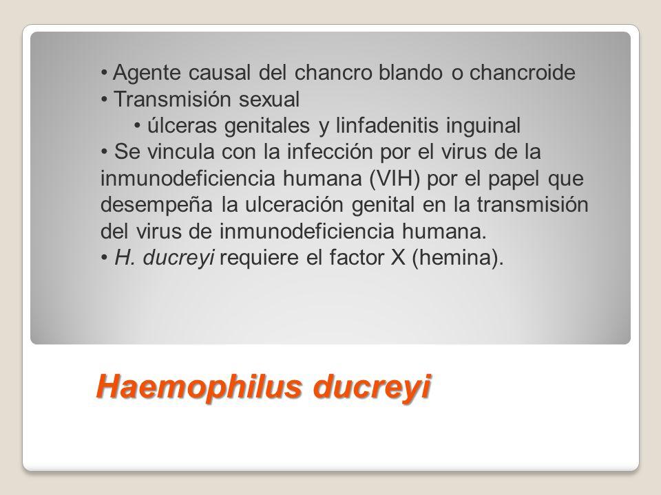 Haemophilus ducreyi Haemophilus ducreyi es el agente causal del chancro blando o chancroide (cap. 115), una enfermedad de transmisión sexual caracteri