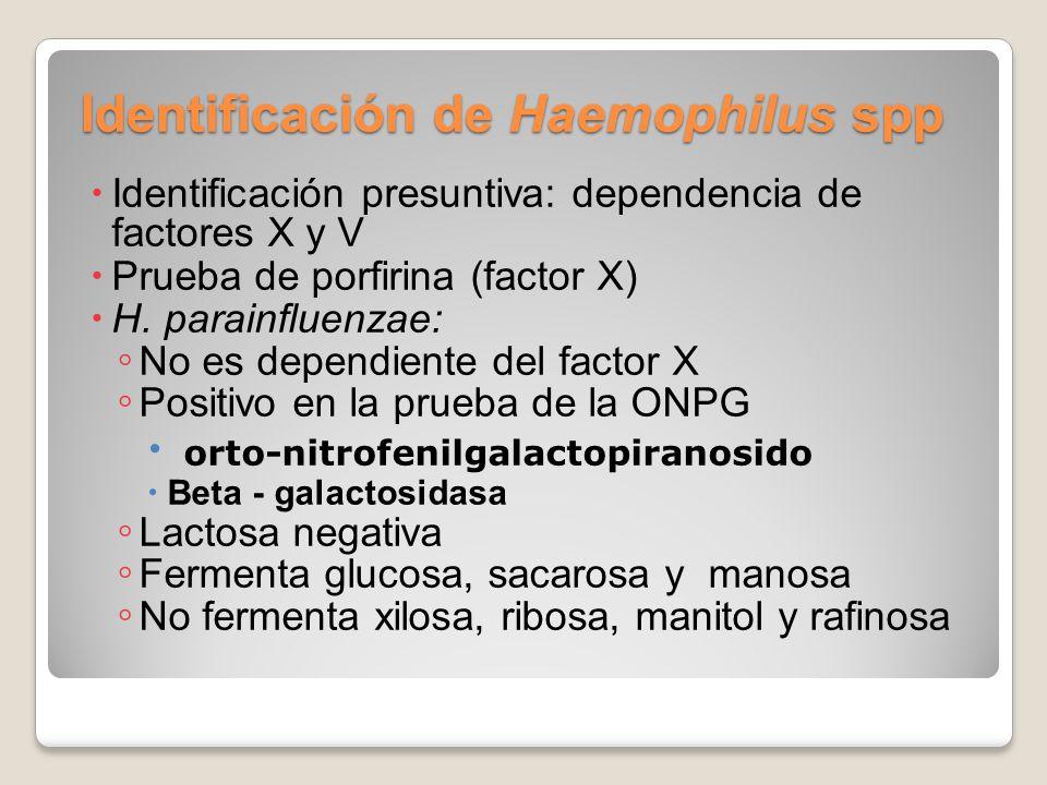 Identificación de Haemophilus spp Identificación presuntiva: dependencia de factores X y V Prueba de porfirina (factor X) H. parainfluenzae: No es dep