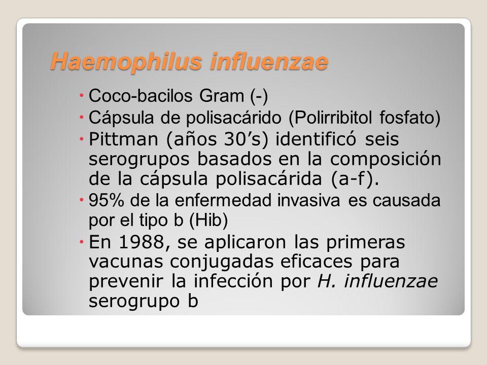 Haemophilus influenzae Coco-bacilos Gram (-) Cápsula de polisacárido (Polirribitol fosfato) Pittman (años 30s) identificó seis serogrupos basados en la composición de la cápsula polisacárida (a-f).