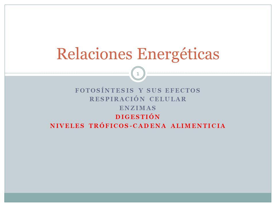 FOTOSÍNTESIS Y SUS EFECTOS RESPIRACIÓN CELULAR ENZIMAS DIGESTIÓN NIVELES TRÓFICOS-CADENA ALIMENTICIA Relaciones Energéticas 1