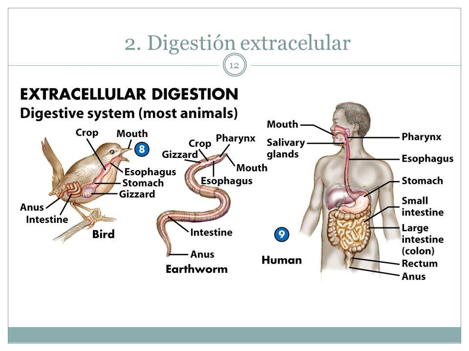 12 2. Digestión extracelular