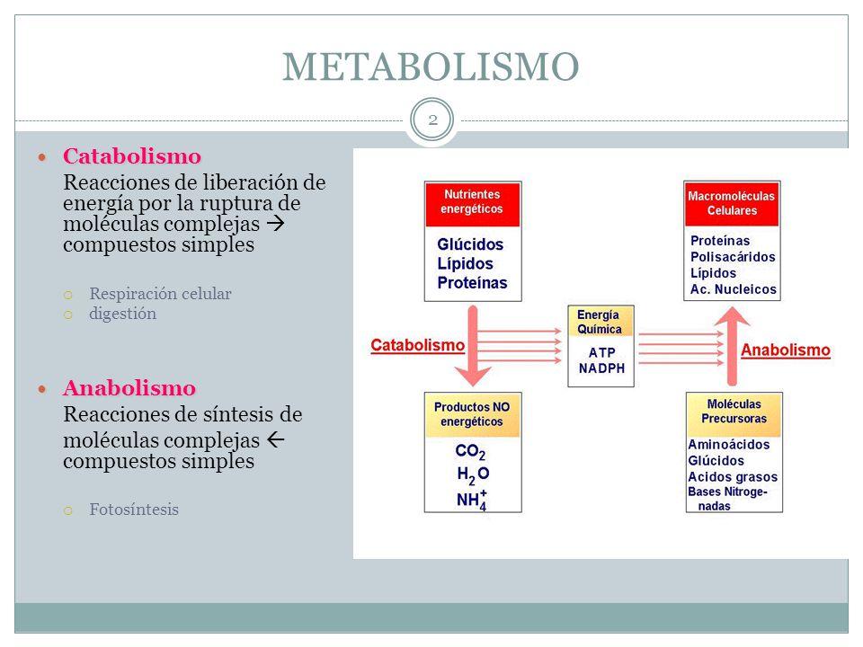 METABOLISMO Catabolismo Catabolismo Reacciones de liberación de energía por la ruptura de moléculas complejas compuestos simples Respiración celular d