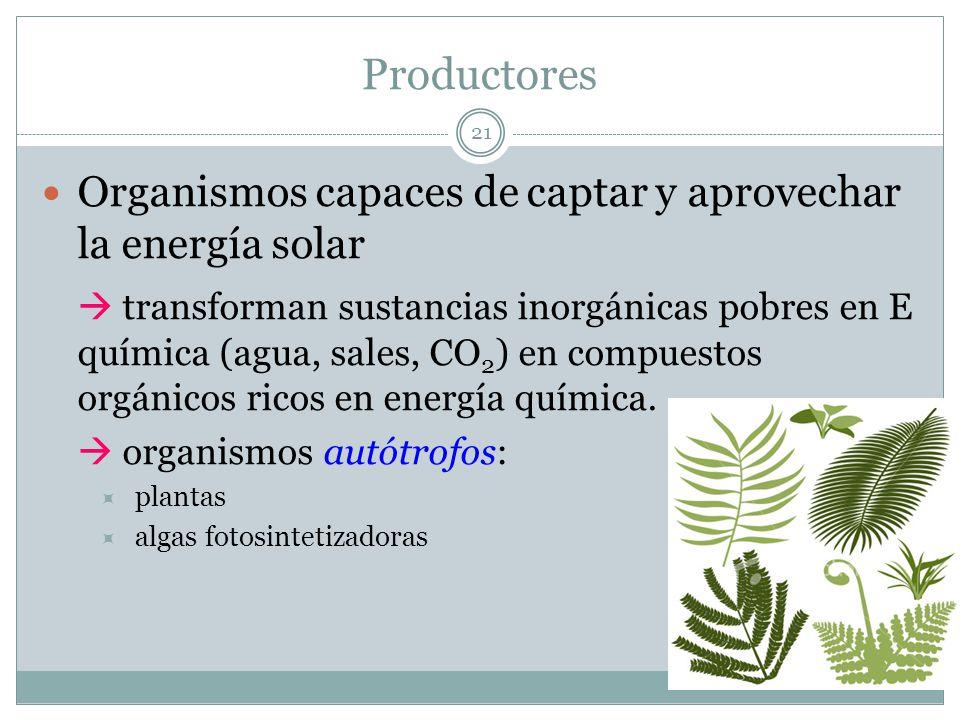 Productores 21 Organismos capaces de captar y aprovechar la energía solar transforman sustancias inorgánicas pobres en E química (agua, sales, CO 2 )