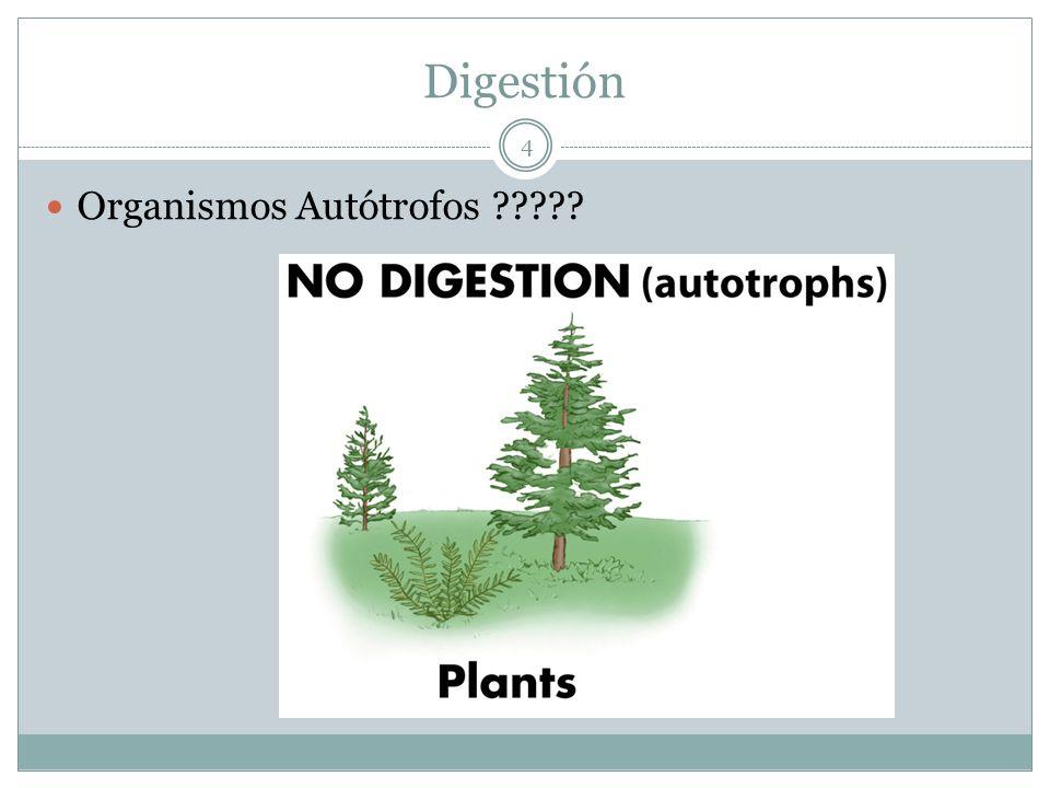 Digestión Organismos Autótrofos ????? 4