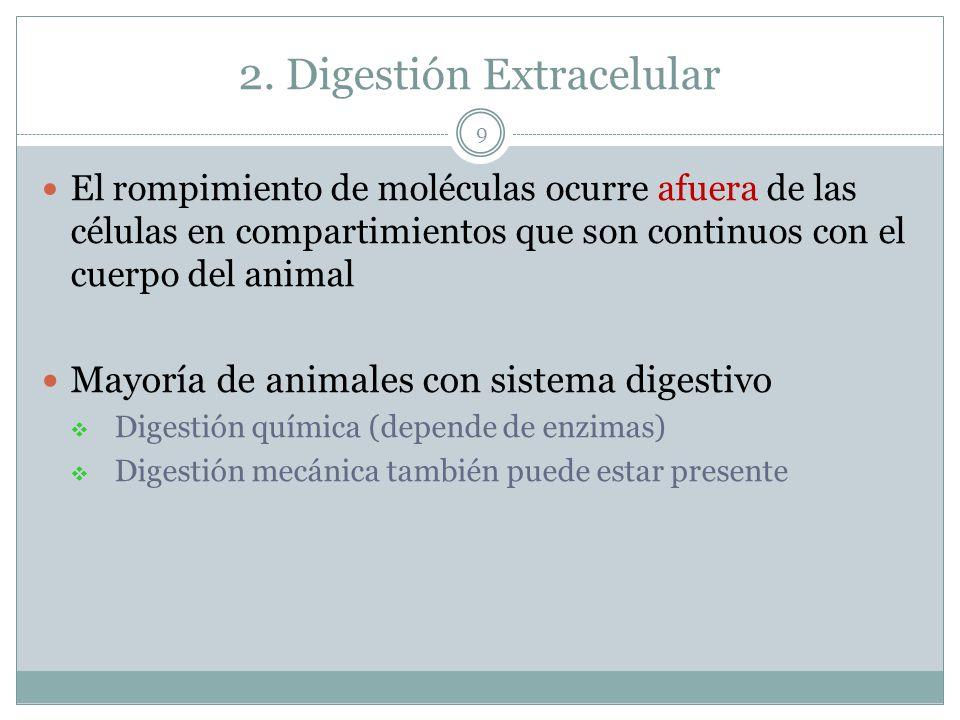 2. Digestión Extracelular El rompimiento de moléculas ocurre afuera de las células en compartimientos que son continuos con el cuerpo del animal Mayor