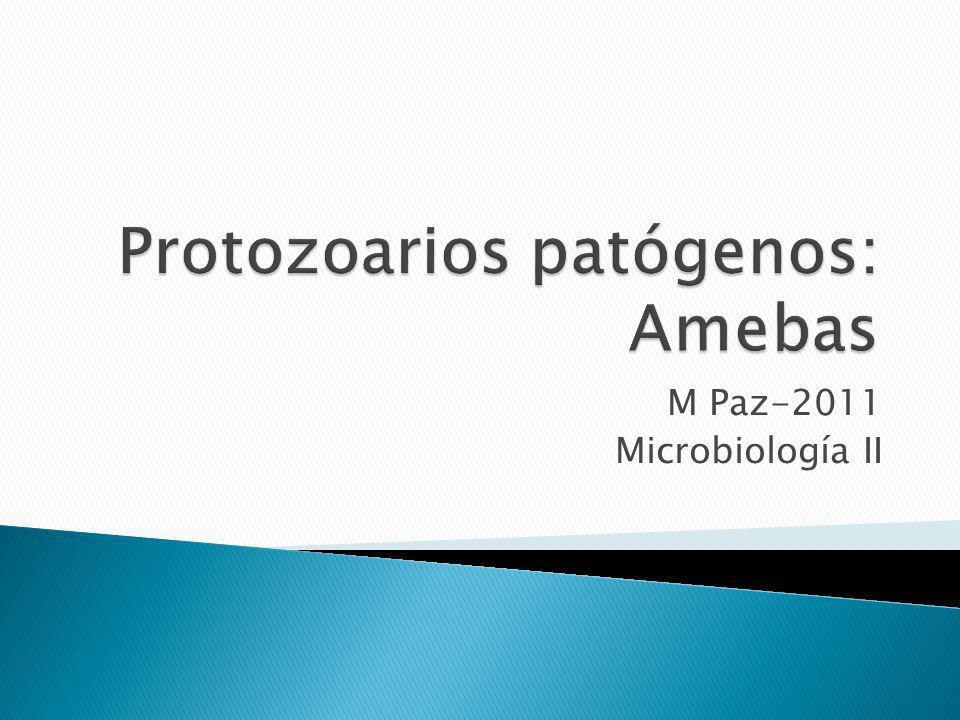 Unicelulares eucariotas con uno o más núcleos Cada célula realiza las funciones necesarias de metabolismo y reproducción para vivir.