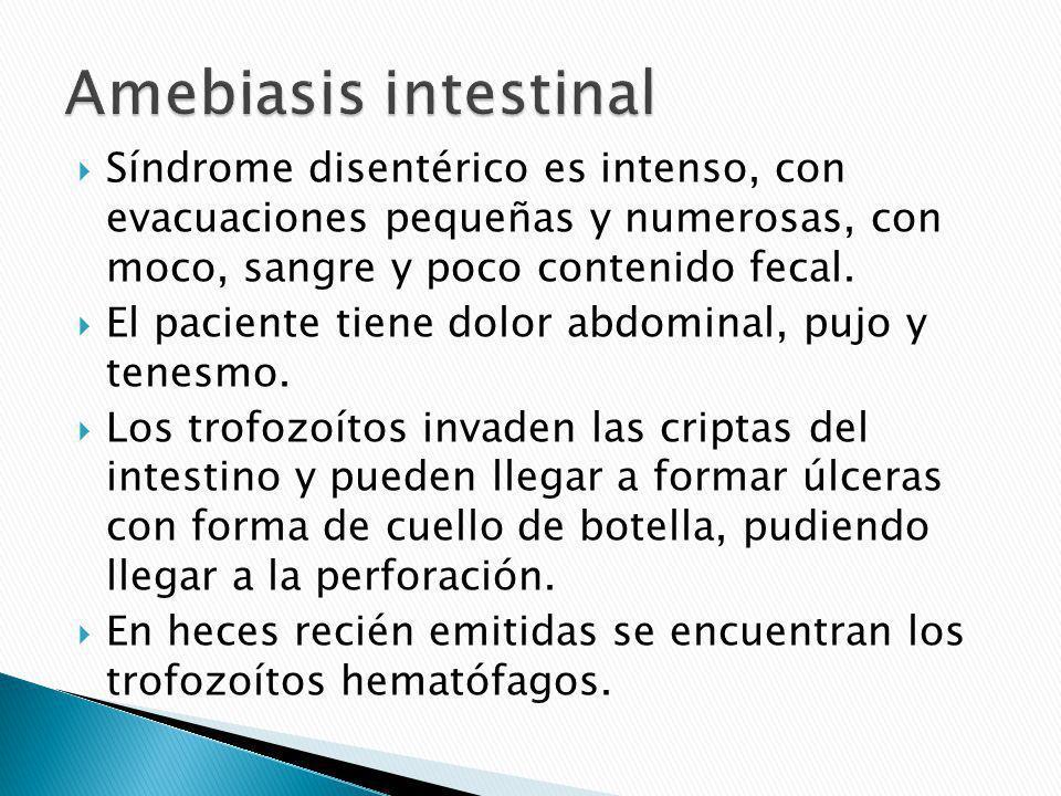 Metástasis de la infección intestinal por la circulación portal.