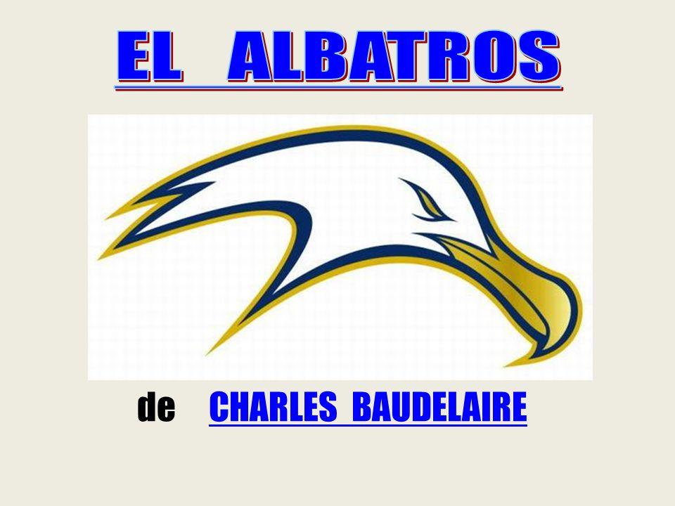 EL ALBATROS Es el ave más grande de las voladoras.