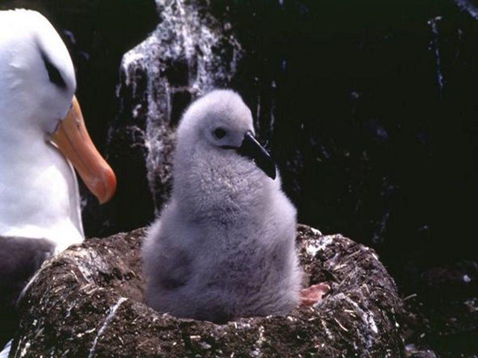 Se compara al albatros con el poeta, mientras que los marineros son la gente, y el navío es el mundo, la vida.