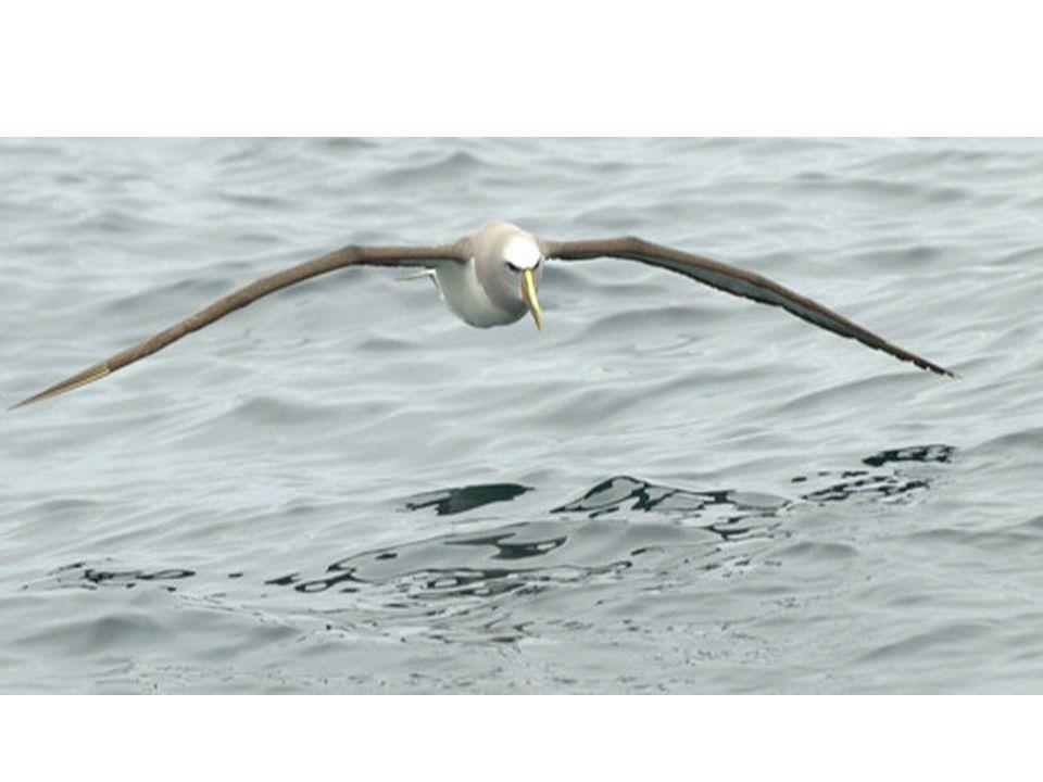 Toi, cet oiseau blanc prisonnier du ciel