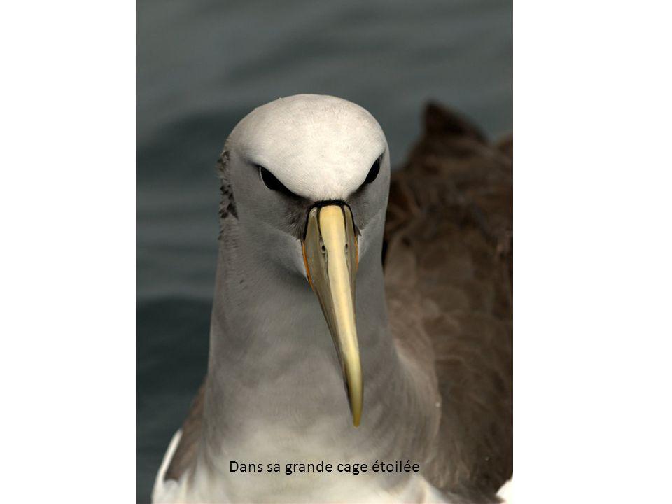 L albatros Souvent, pour samuser, les hommes déquipage Prennent des albatros, vastes oiseaux des mers, Qui suivent, indolents compagnons de voyage, Le navire glissant sur les gouffres amers.