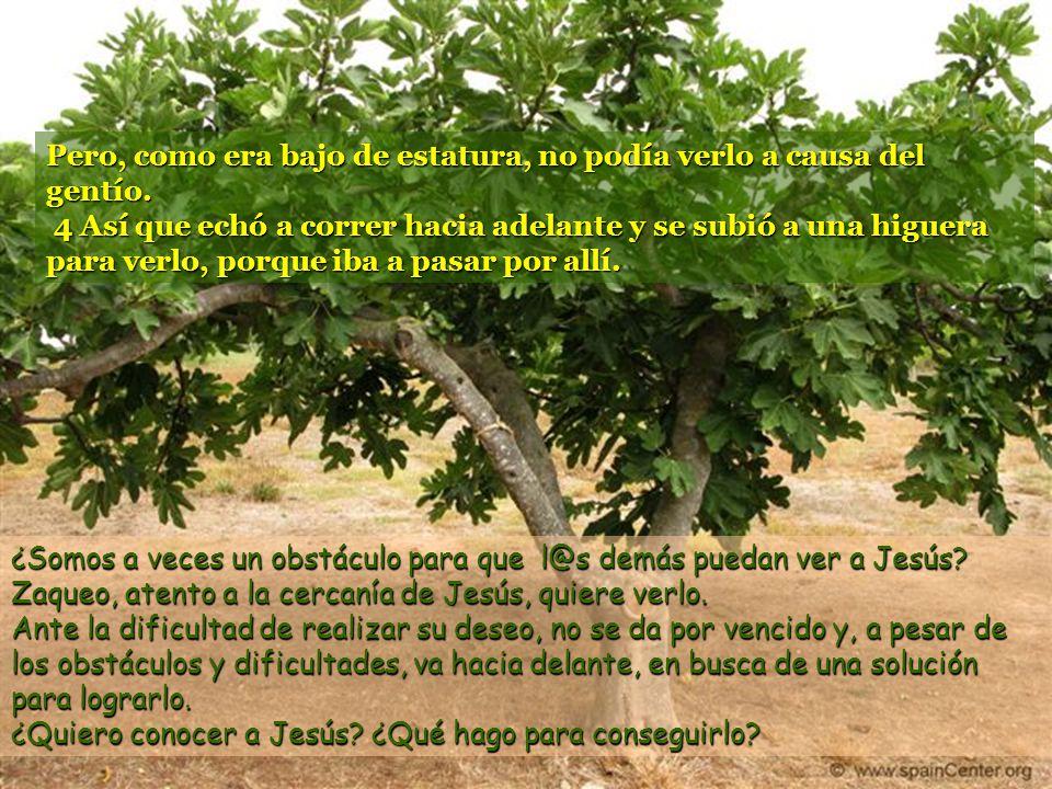 www.vitanoblepowerpoints.net 2Había en ella un hombre llamado Zaqueo, jefe de publicanos y rico, 3 que quería conocer a Jesús. Zaqueo es jefe de recau