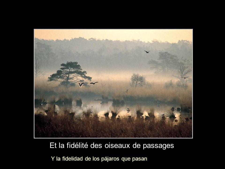 Et la fidélité des oiseaux de passages Y la fidelidad de los pájaros que pasan