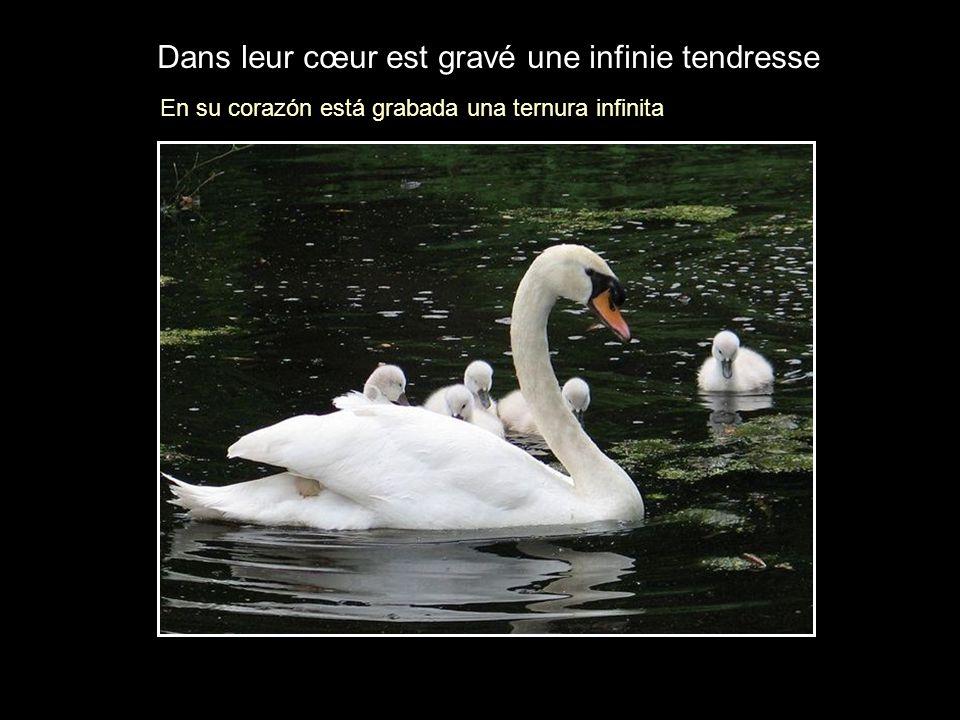 Dans leur cœur est gravé une infinie tendresse En su corazón está grabada una ternura infinita