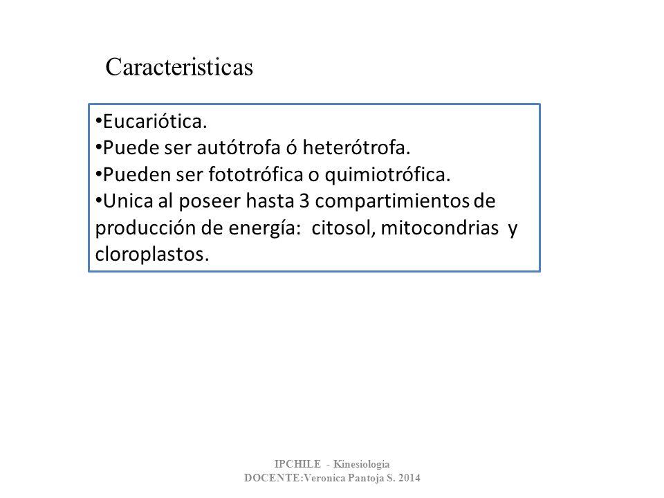 Eucariótica. Puede ser autótrofa ó heterótrofa. Pueden ser fototrófica o quimiotrófica. Unica al poseer hasta 3 compartimientos de producción de energ