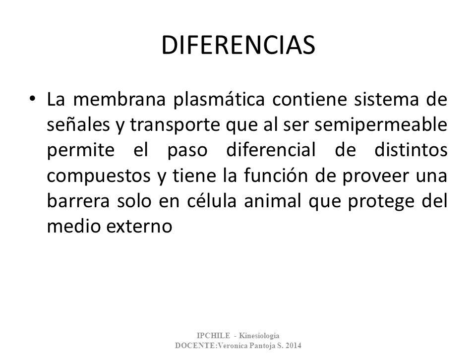 DIFERENCIAS La membrana plasmática contiene sistema de señales y transporte que al ser semipermeable permite el paso diferencial de distintos compuest