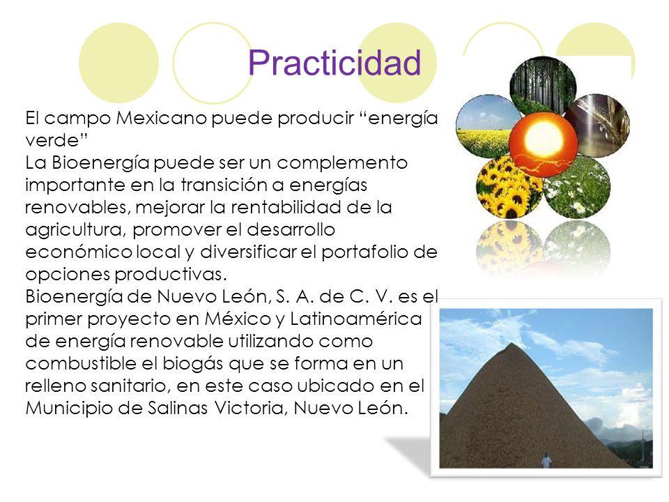 Practicidad El campo Mexicano puede producir energía verde La Bioenergía puede ser un complemento importante en la transición a energías renovables, m