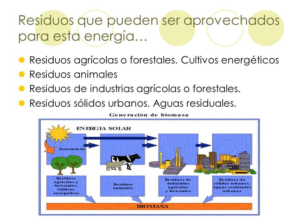 Residuos que pueden ser aprovechados para esta energía… Residuos agrícolas o forestales. Cultivos energéticos Residuos animales Residuos de industrias