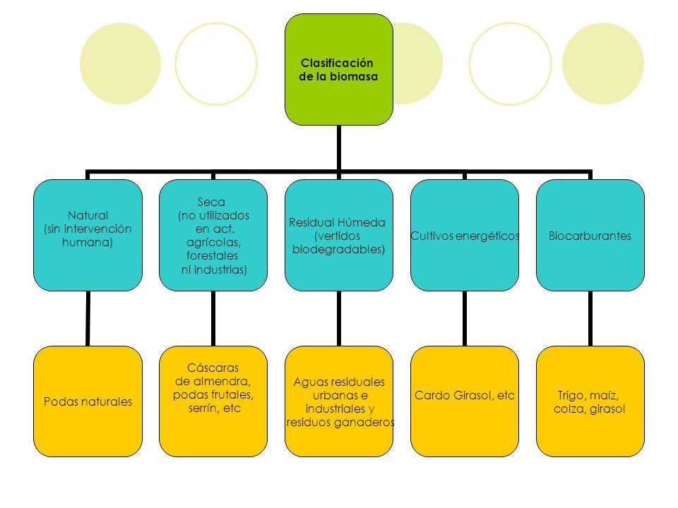 Clasificación de la biomasa Natural (sin intervención humana) Podas naturales Seca (no utilizados en act. agrícolas, forestales ni industrias) Cáscara
