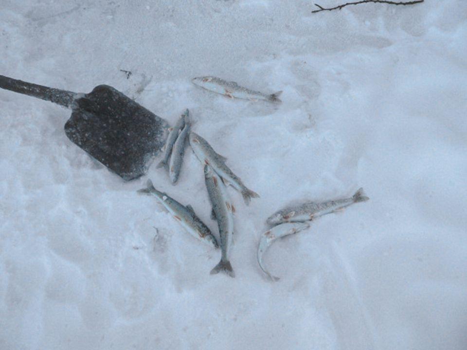 Cuando los pescadores de este pueblo acuden a un día de pesca, cuando consiguen que un pez pique el anzuelo al sacarlo de las aguas cubiertas de hielo