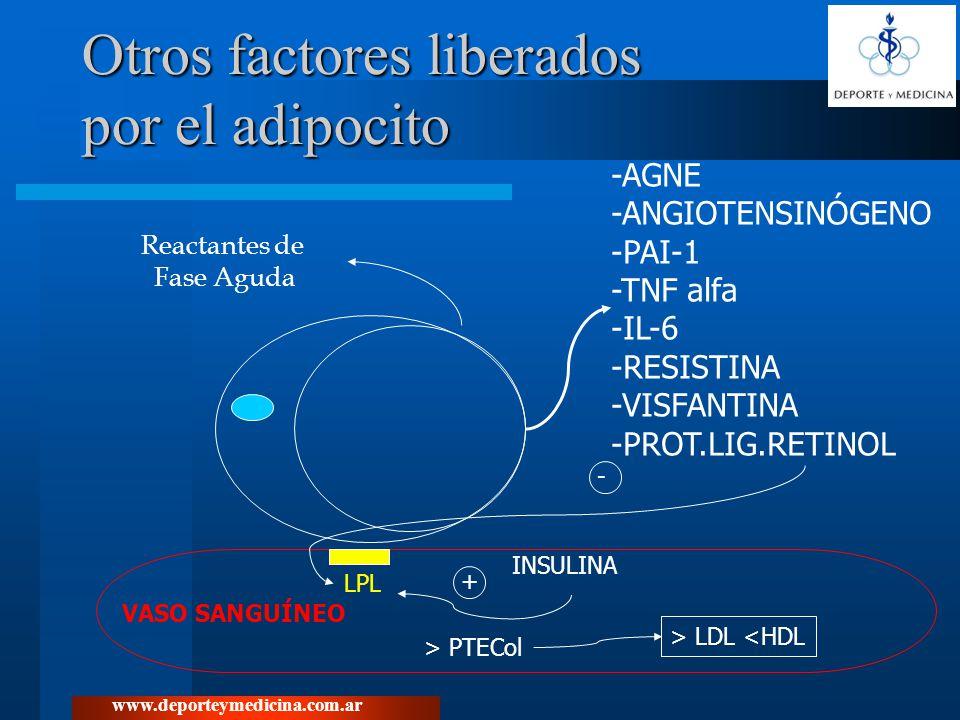 www.deporteymedicina.com.ar Otros factores liberados por el adipocito -AGNE -ANGIOTENSINÓGENO -PAI-1 -TNF alfa -IL-6 -RESISTINA -VISFANTINA -PROT.LIG.