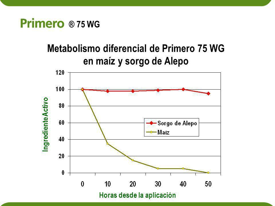 Metabolismo diferencial de Primero 75 WG en maíz y sorgo de Alepo Horas desde la aplicación Ingrediente Activo ® 75 WG
