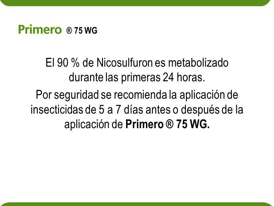 El 90 % de Nicosulfuron es metabolizado durante las primeras 24 horas. Por seguridad se recomienda la aplicación de insecticidas de 5 a 7 días antes o