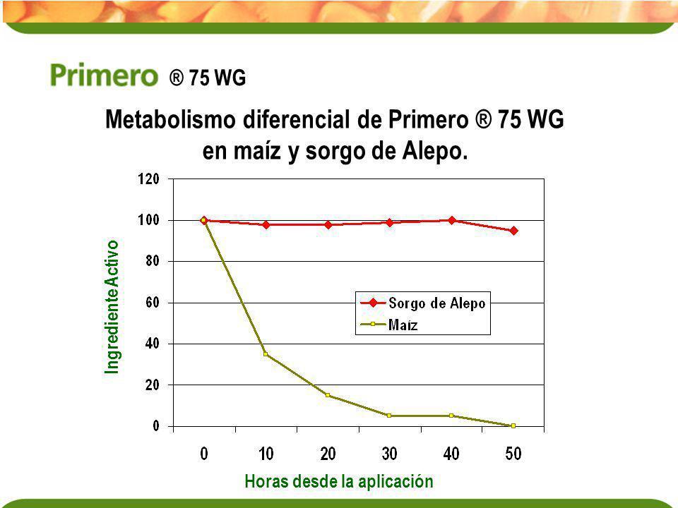 Metabolismo diferencial de Primero ® 75 WG en maíz y sorgo de Alepo. Horas desde la aplicación Ingrediente Activo ® 75 WG