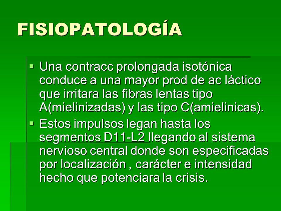 FISIOPATOLOGÍA Una contracc prolongada isotónica conduce a una mayor prod de ac láctico que irritara las fibras lentas tipo A(mielinizadas) y las tipo C(amielinicas).