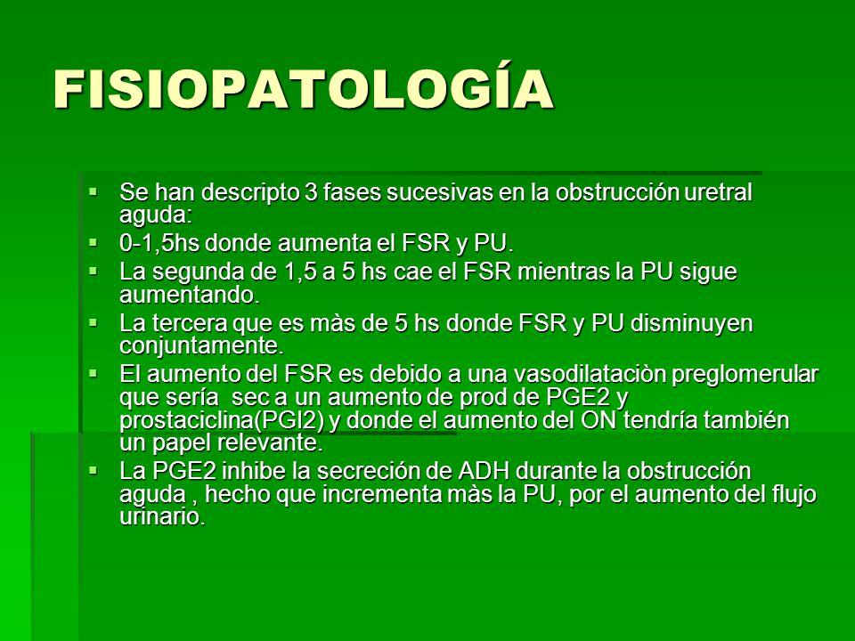 FISIOPATOLOGÍA Se han descripto 3 fases sucesivas en la obstrucción uretral aguda: Se han descripto 3 fases sucesivas en la obstrucción uretral aguda: 0-1,5hs donde aumenta el FSR y PU.